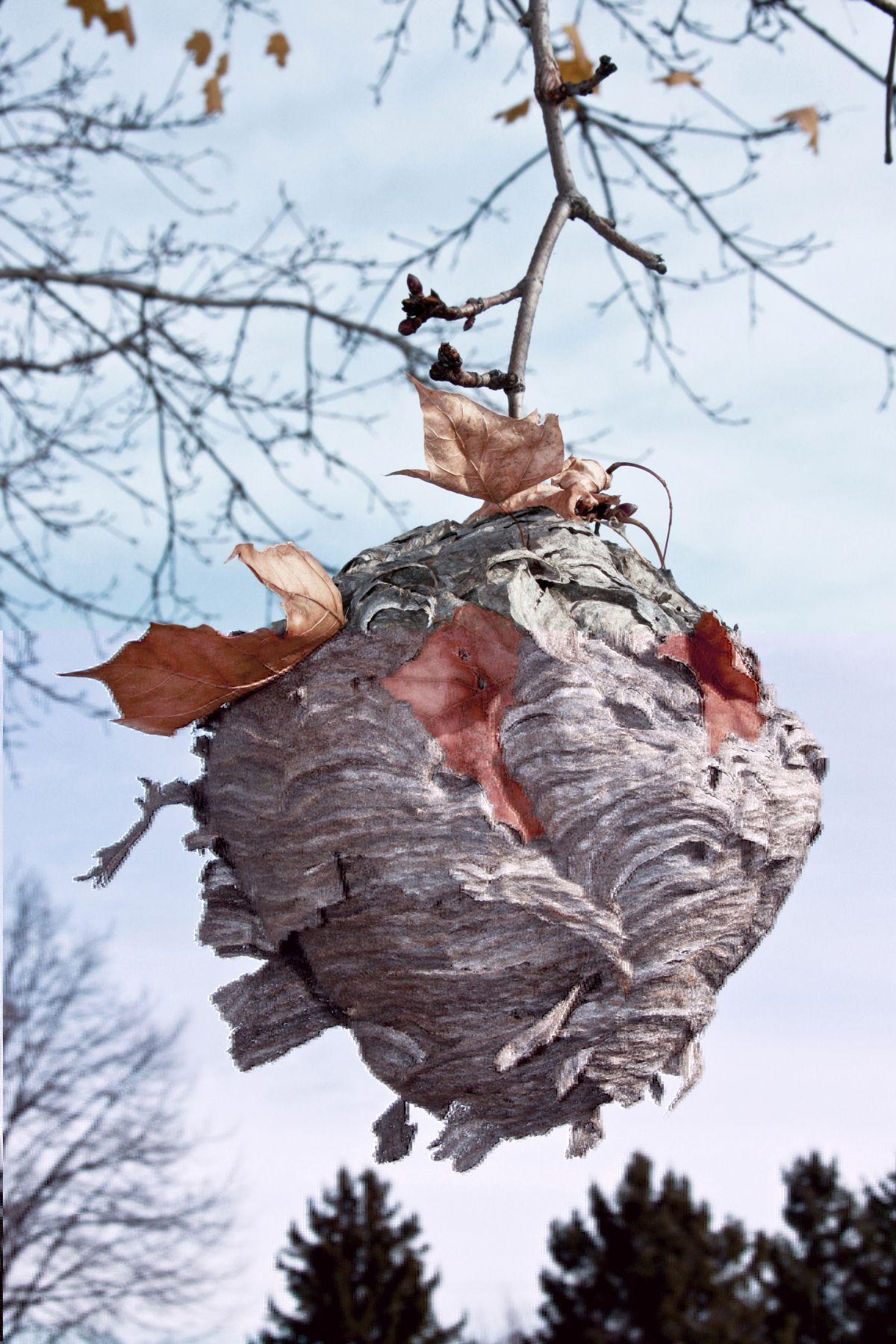 Un nid de guêpes dans un arbre